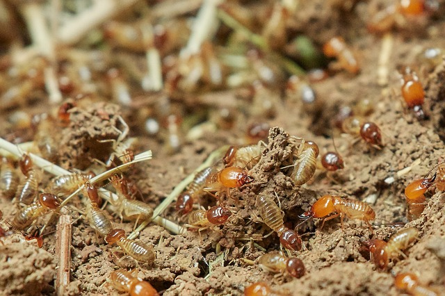 Group of soldier termites up close