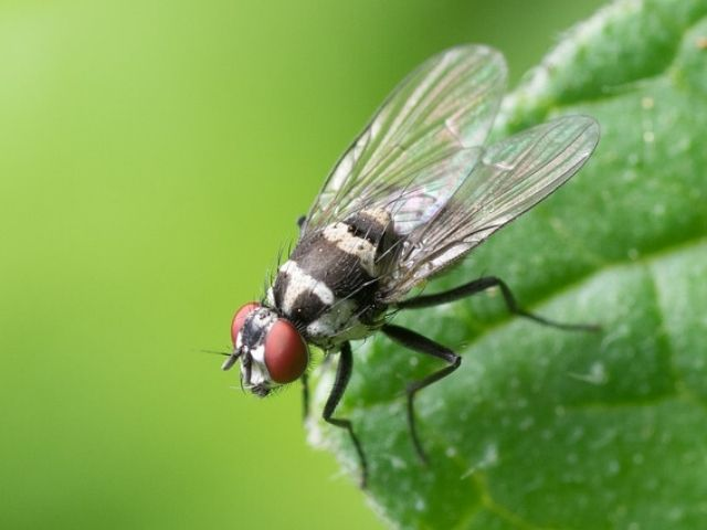 close up image of house fly on leaf