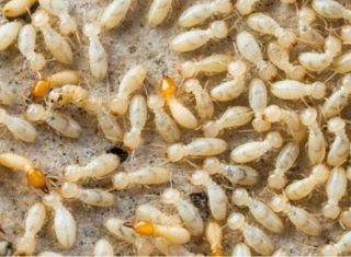 group of termites up close