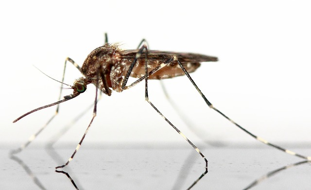 mosquitoes in Texas - up close image of brown mosquito