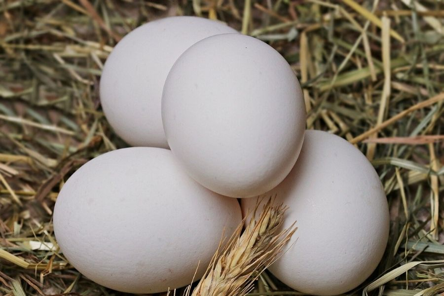 using egg shells to keep slugs out of your pasadena garden - four eggs up close