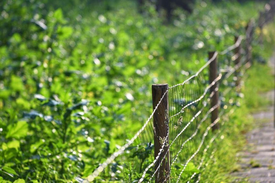 wire fence around pasadena tx garden
