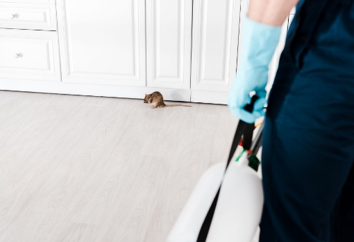 Pest Control - rodent in a kitchen