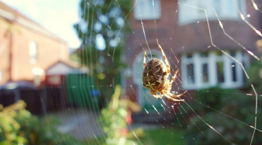 spider in its web during day with house in background
