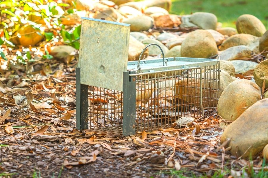 humane rodent and rat trap
