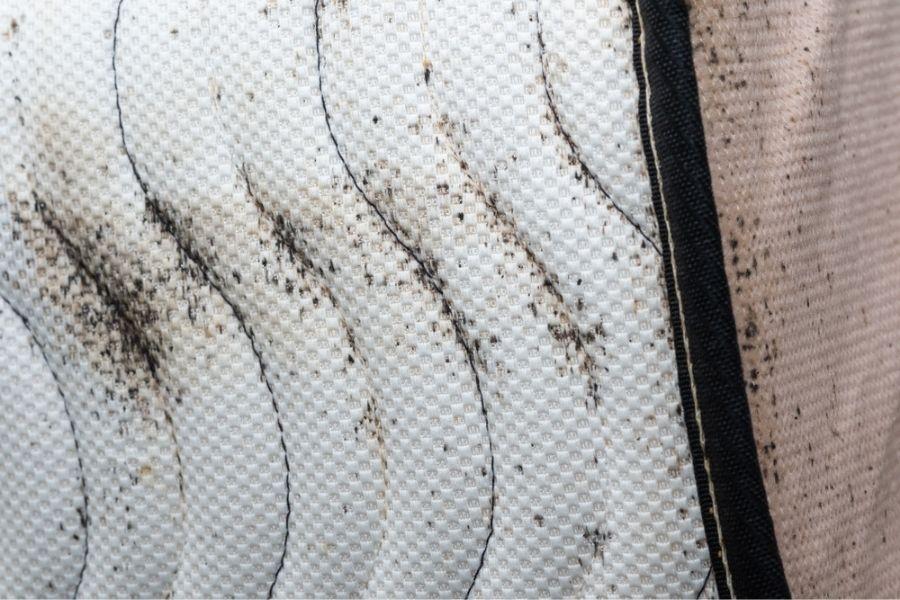 bed bug spotting on mattress
