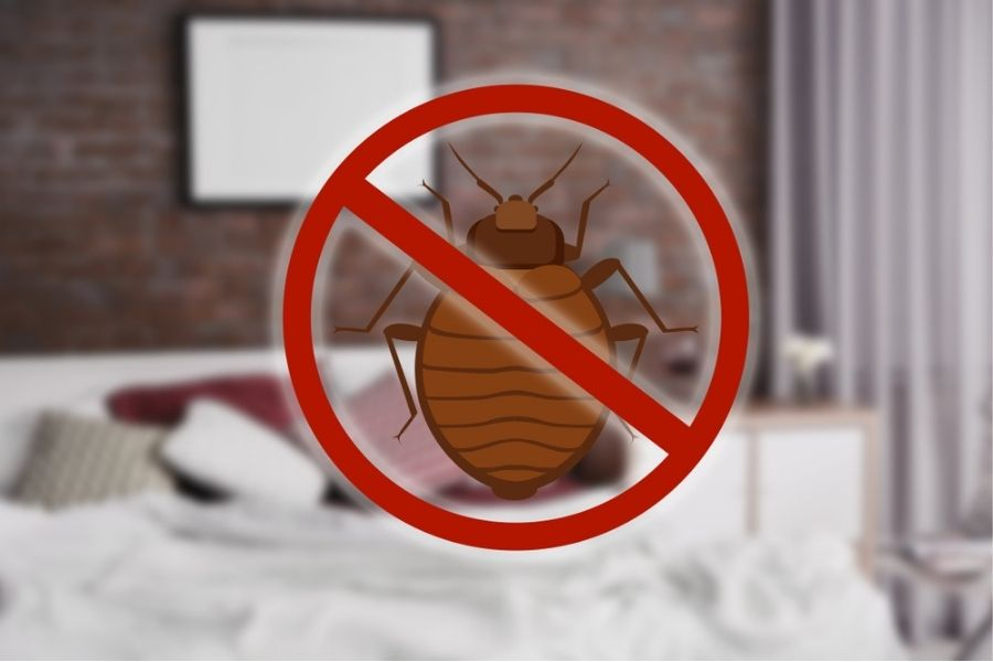 stop bed bug sign